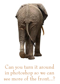 Image of back side of elephant with caption saying Can you turn it around in Photoshop so we can see more of the front?